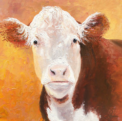 Hereford Cow on a gold background.