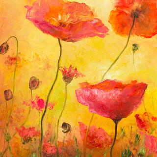 Poppy delight