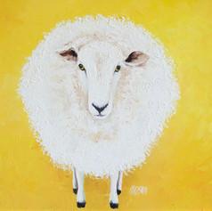 White Sheep on Yellow