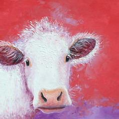 White cow on red background.