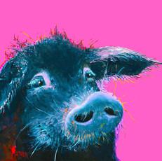 Black Pig on pink.