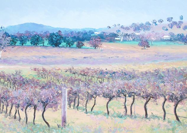 Vineyard near Murumbateman, New South Wales