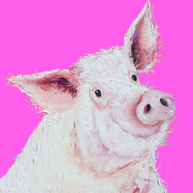 Pig on hot pink