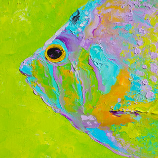 Tropical fish on lime green