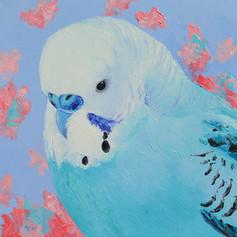 Blue Budgie - Native Bird Art