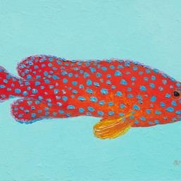 Strawberry grouper fish