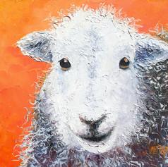 Sheep on orange