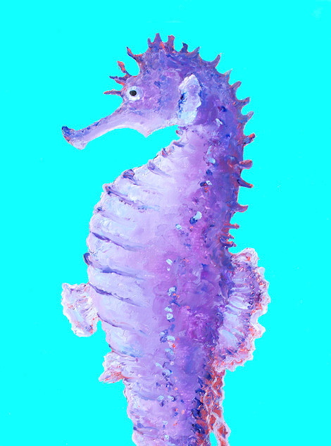 Seahorse on turquoise