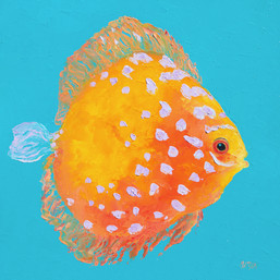 Orange Discus Fish with purple spots