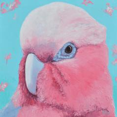 Galah Cockatoo - Australian native bird