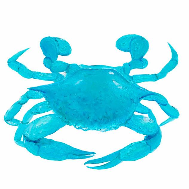 Turquoise Crab