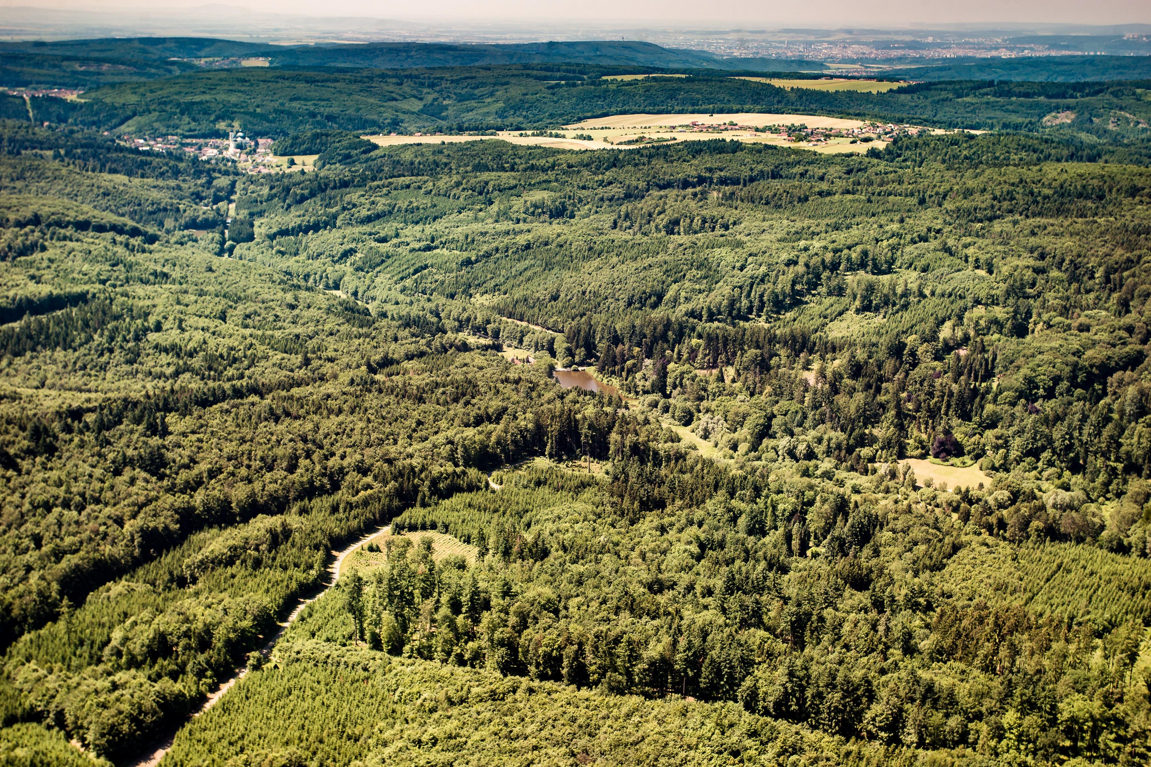 23-Moře univerzitních lesů.jpg