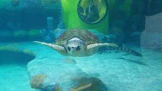 Oklahoma Aquarium Sea Turtle Island -                              Jenks, OK
