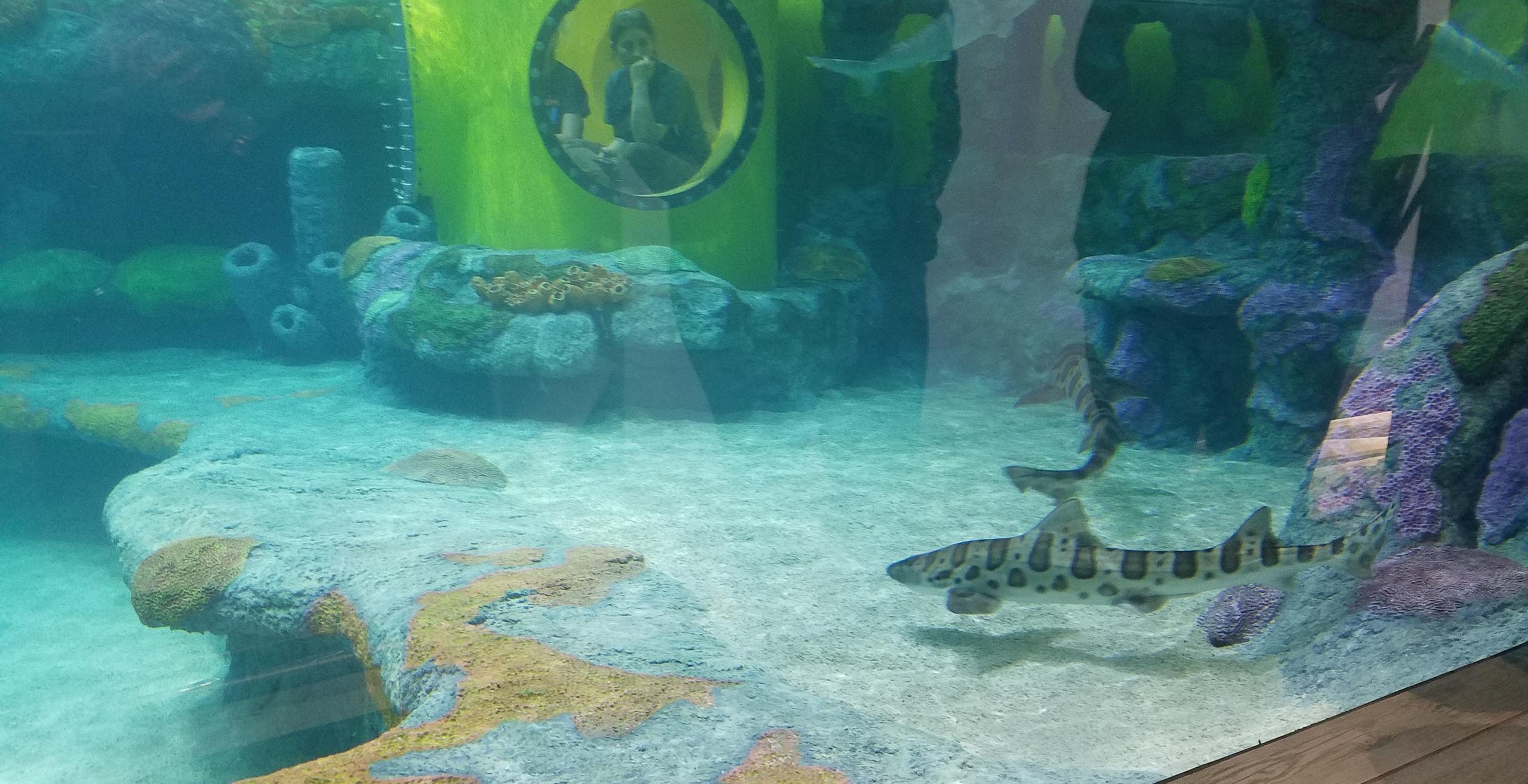 Sea Turtle Island, OK Aquarium