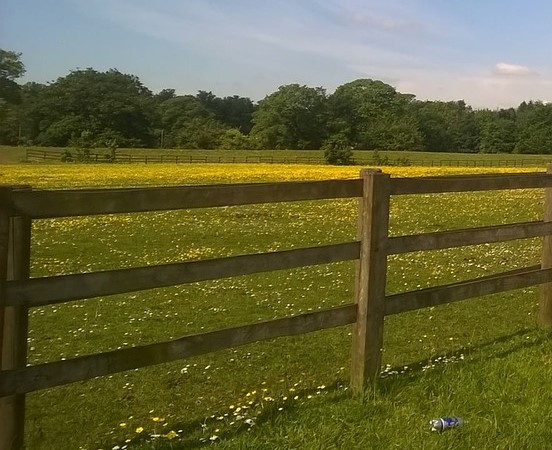 Post and rail fencing offers great views of the land