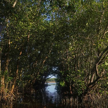 Preocupadas por la deforestación, ocupadas en la reforestación de los manglares