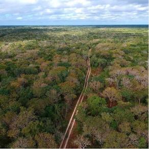 ¿Qué  son los bosques? Si tan solo nos adentráramos a observarlos, nos responderíamos con una imagen