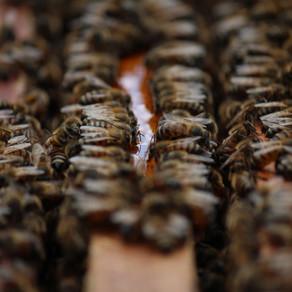 La economía de las abejas
