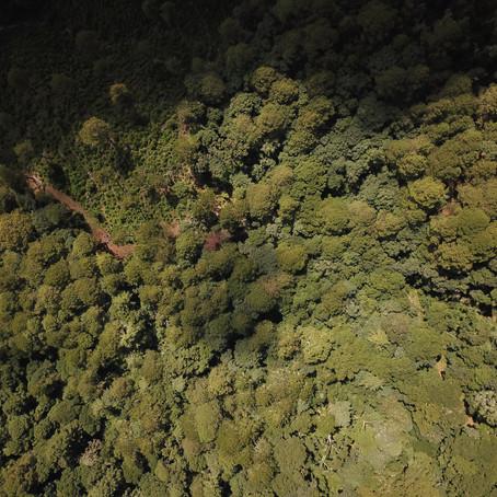 Mitigar las afectaciones del cambio climático a través del manejo forestal.