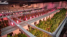 Foundation Farms  Vertical Farm Overhead