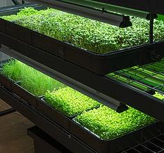 Foundation Farms Vertical Farming_Seedling Rack