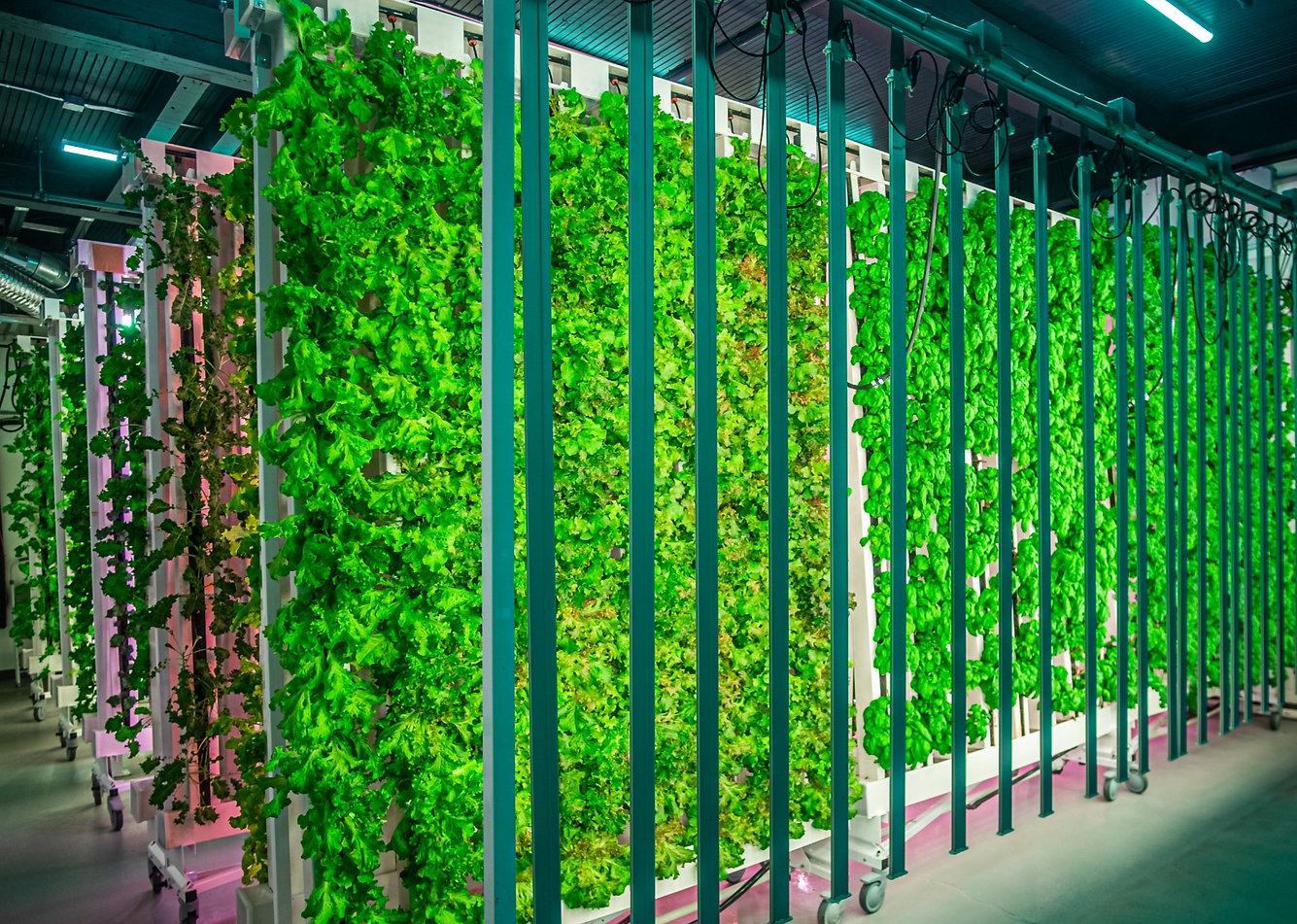 Foundation Farms Vertical Farming Wall Hyrdoponic