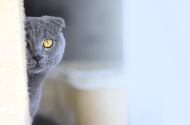 кот серый санин 1.png