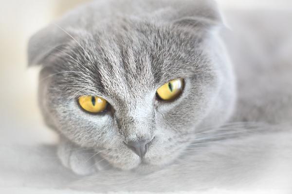 Кот серый Санин.png