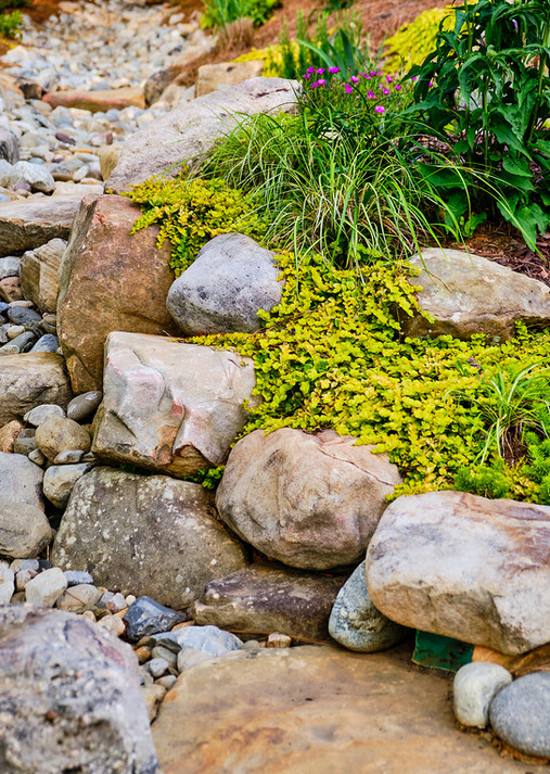 rocks and plants