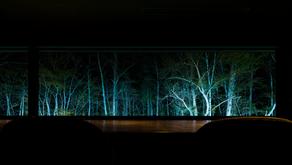 夜の森を視る照明