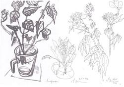 """Из цикла """"Мир цветов и растений"""". 2020"""