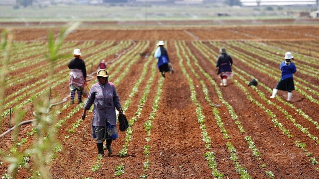 How to Invest in African Agriculture: Insights from the Welcome 2 Africa Summit
