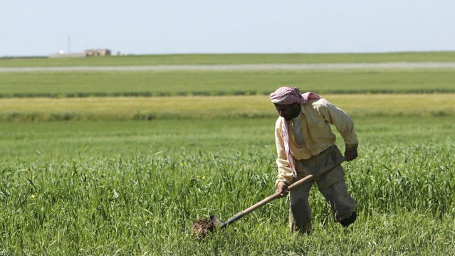 4 Reforms to Bring Back Syrian Agriculture
