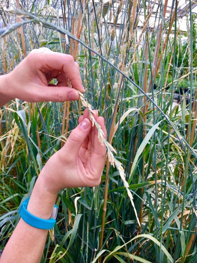 A Quiet Agricultural Revolution in Kansas