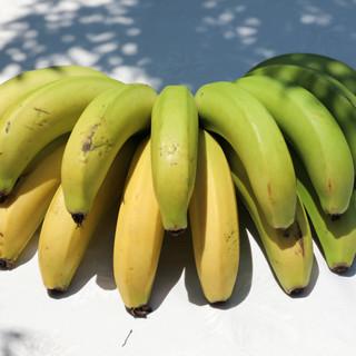 Taze Meyvelerimiz