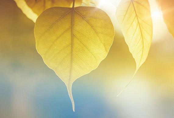 yellow-leaf-676578.jpg