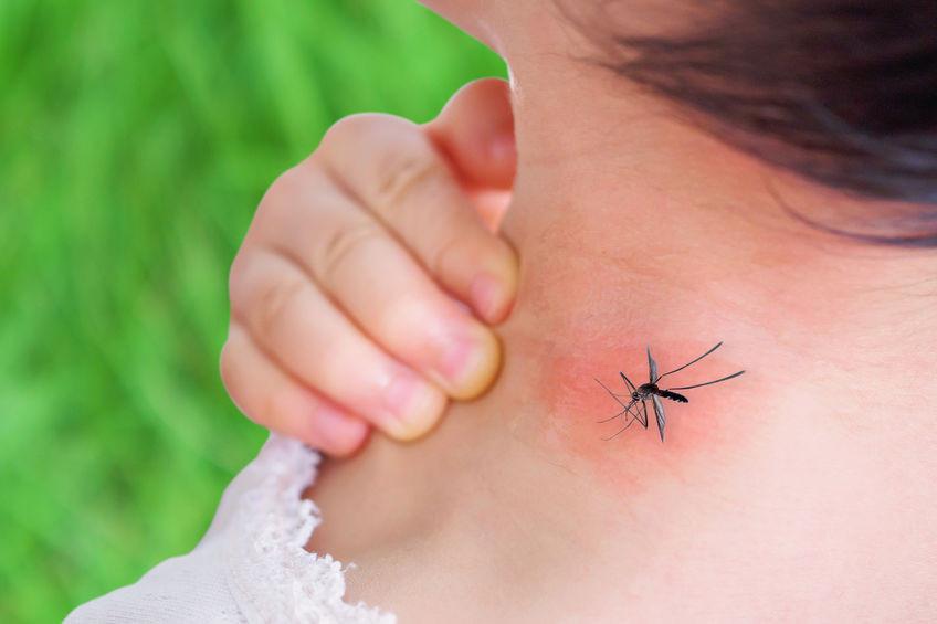 soigner une piquée de moustique