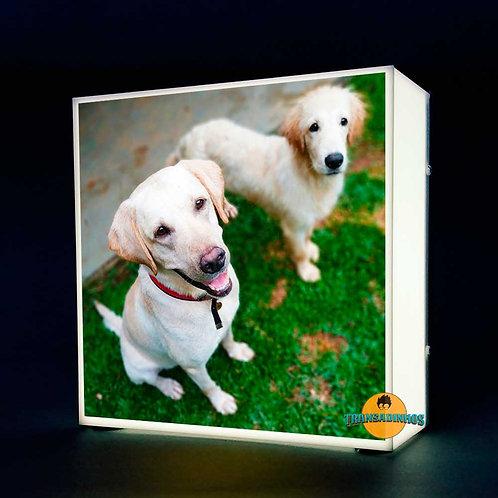 Luminária Personalizada - Foto Do Seu Cão