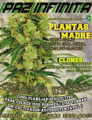 plantar maconha - colher kilo maconha