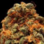 pistilos-maduros-sementes-colheita