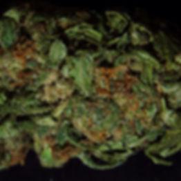 tricomas cannabis