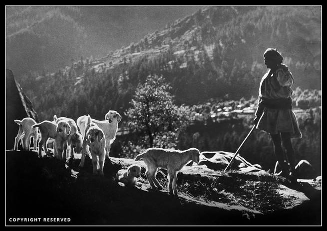 Shepherd of Manali -T Kasinath.jpg