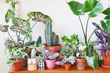 boutiques-en-ligne-plantes-rares-1.jpg