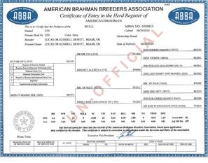 DeWitt = Registered bull calf PAPERS.jpg