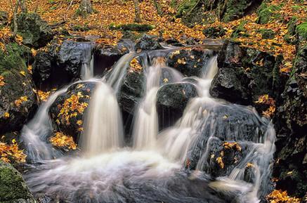 Autumn Stream   (A212.jpg)