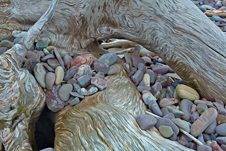 Driftwood, Bay of Fundy  (N14221.jpg)