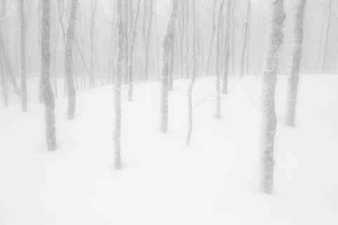 Snowshoeing in the Fog   (W1111.jpg)