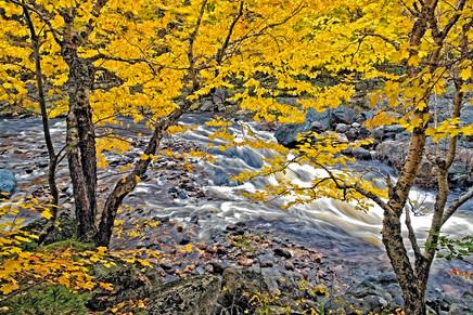 Autumn Stream   (A11758.jpg)