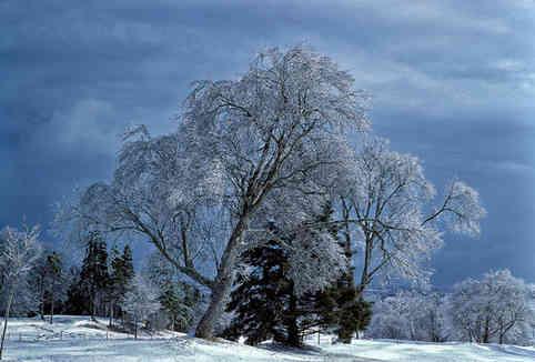 Ice Storm   (W204.jpg)