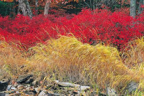 Fall Grasses   (A62.jpg)